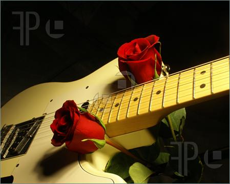 White-Guitar-Red-Roses-507597
